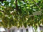 Lattice with grapes