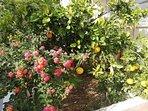 Flowers and oranges in garden
