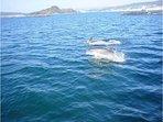 Si fijas la vista en el horizonte podrás ver delfines. Todos los días pasan saltando frente a Raxó