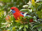 Be greeted by many of our colourful locals you'll find feasting in our garden.