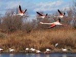 Parc ornithologique de Camargue.