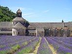 Abbaye de Sénanque, vous avez aussi l'Abbaye de Montmajour...