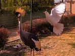 Bianca et pigeons dans la Volière
