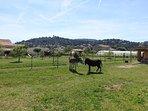 L'enclos de nos deux ânes