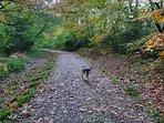 Lovely walks in Parkhurst Forest near Cowes