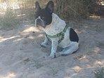 rincon de perros en la playa