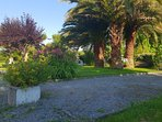 Boulodrome à l'ombre des palmiers