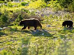 Black bears roam the forests and mountains surrounding the village