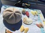 Snorkeling treasures.
