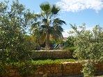 Beautiful gardens outside the Orange grove  apartment at Finca Arboleda