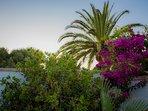 Jardín y palmeras