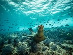 Snorkeling with sea lions is part of your unforgettable boat trip
