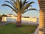 Jardín y palmera desde el porche