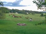 Watch the horses graze in the pasture.