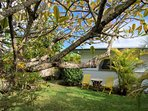 Morning coffee under a plumeria tree?