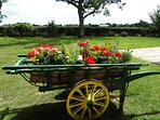 Summer flowers in our cart