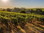 Vignoble de Bergerac, visite conseillée par le Domaine de Geneviève des vignes, en viticulture Bio!