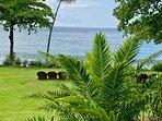 Le superbe jardin tropical de l'hôtel