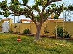 En el jardín un gran árbol con buena sombra y columpios para niños