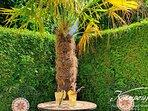 Wie wärs mit einem kühlen Drink unter Palmen?