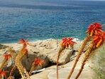 particolare giardino sul mare