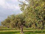 Azienda agricola produzione olio extravergine di oliva