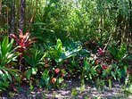 Landscape filled with anthuriums, ti, ginger, laua'e ferns & monstera